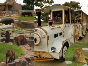 zoo, parque de las leyendas, lima