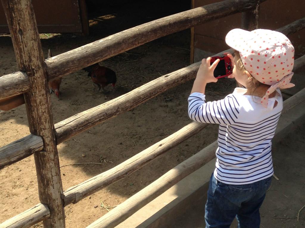 Fotografando as galinhas...