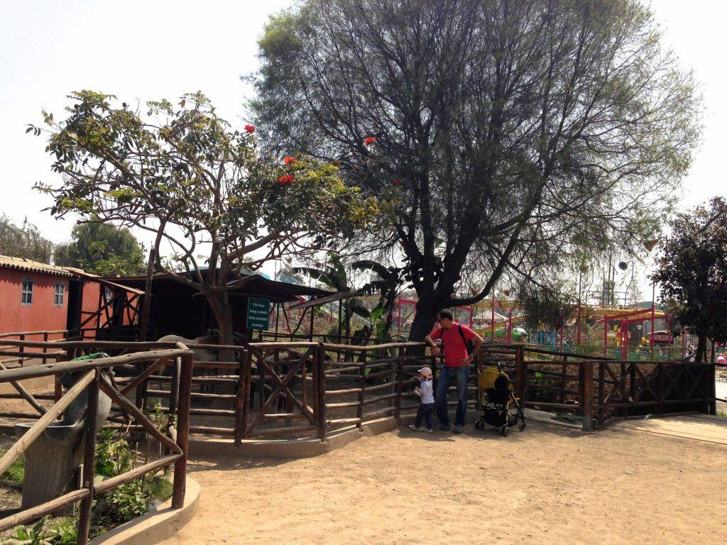 huachipa-ponei