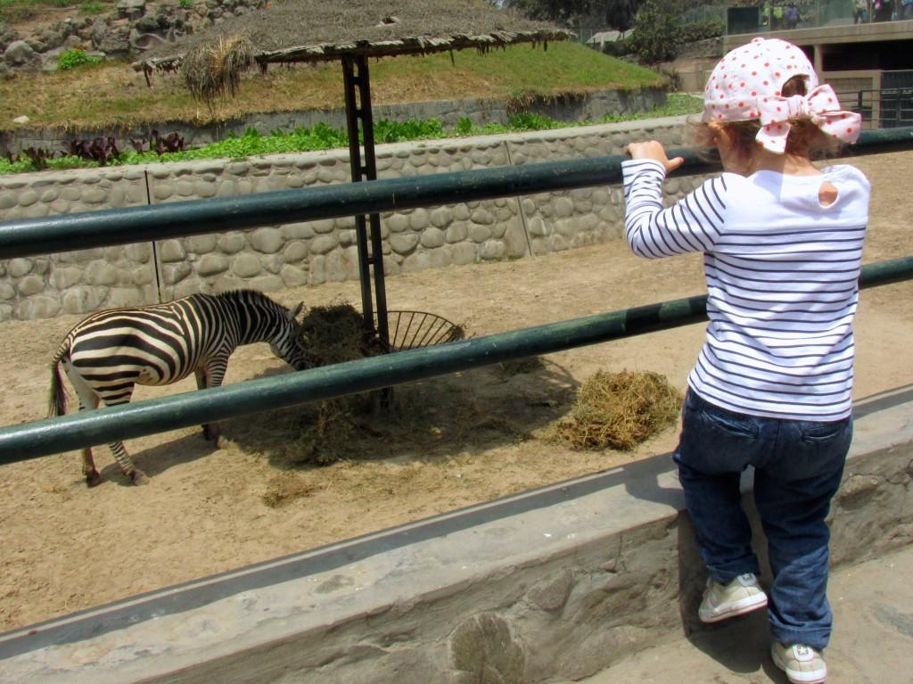 As zebras, que Olivia chama de Zou, por causa do desenho animado. :-)