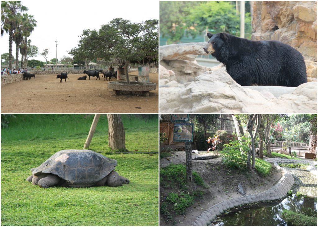 zoológico de Lima Parque de las Leyendas