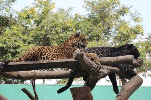 zoológico Parque de las Leyendas