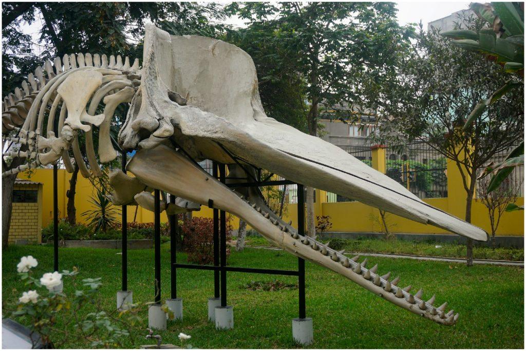 Museu de História Natural de Lima, Peru.