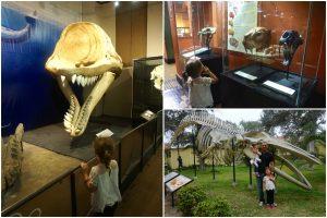 Museu de Historia Natural de Lima, Peru.